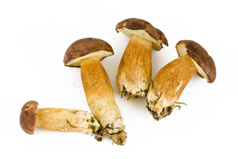 Four fresh mushroom stock image