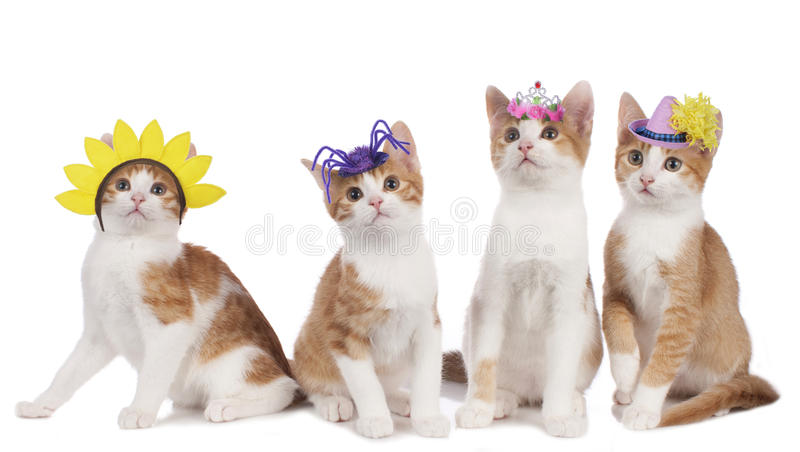 Four funny cats with carnival hats. Isolated stock photos