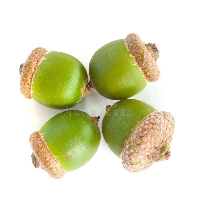 Four Green Acorn Royalty Free Stock Photo