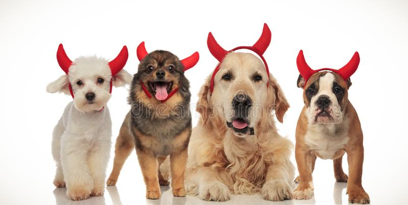 Four happy dogs wearing devil horns for halloween. Collage image stock images