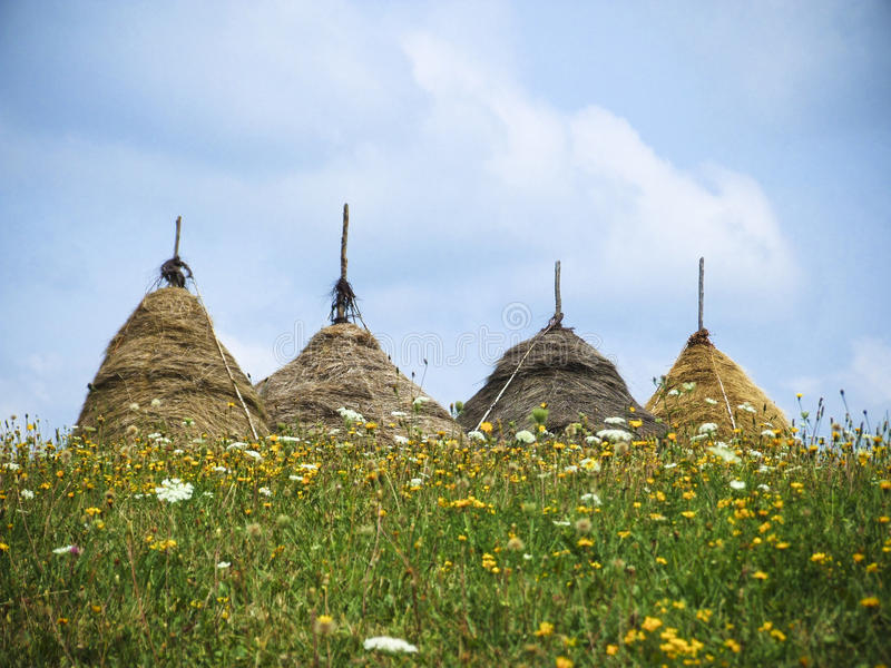Four haystacks on grass stock image