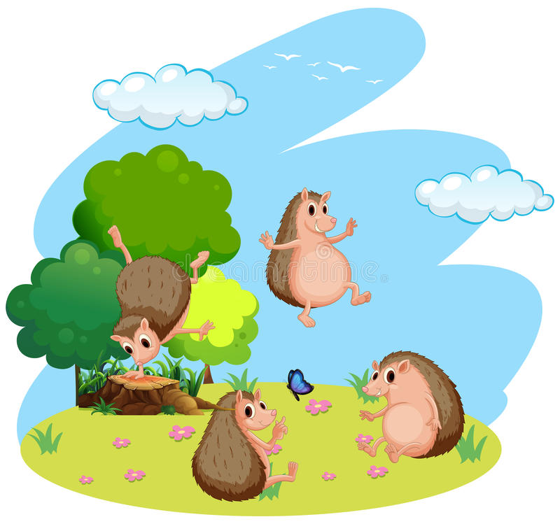 Four hedgehog in the field stock image