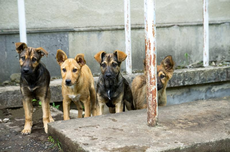 Four homeless stray dogs want to eat. Stray hungry dogs live in a flock in an abandoned building. Puppies want to eat and need help stock photo