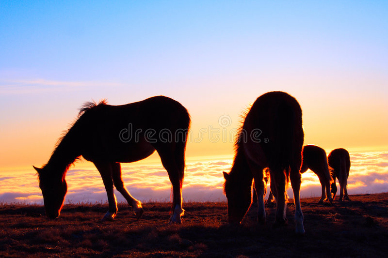 Download Four horses on a pasture stock image. Image of cold, grass - 8729985