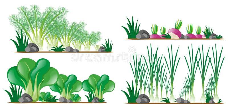 Four kinds of vegetables in the garden. Illustration royalty free illustration