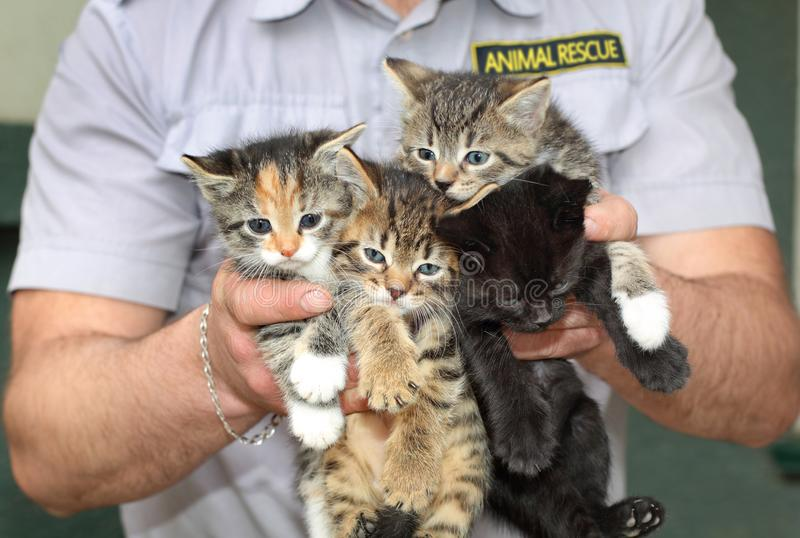 Four kittens in the male hands. Animal rescue. stock image