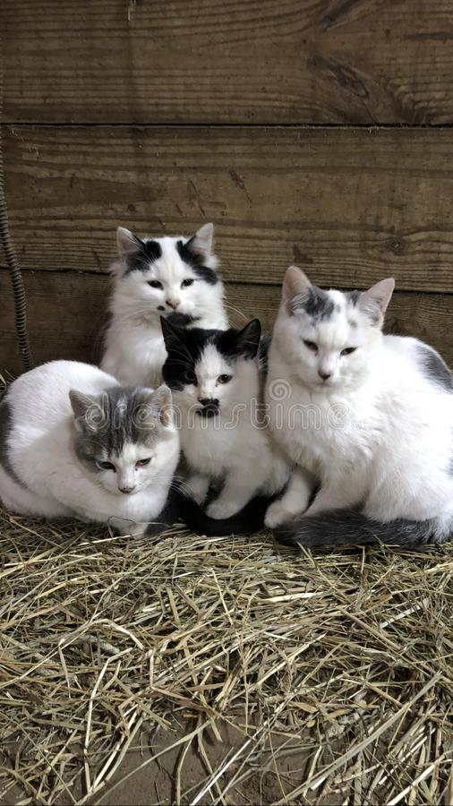 Four kitties royalty free stock images