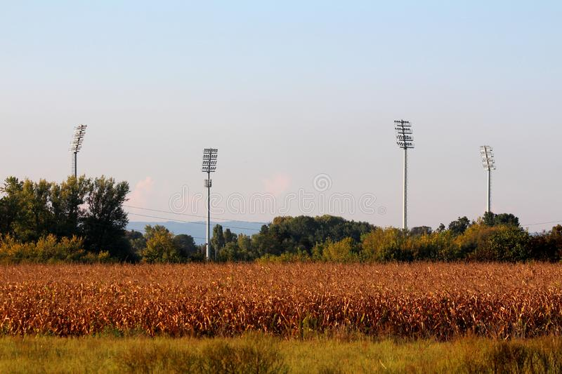 Four large tall stadium reflector lights rising high above stadium and trees behind dry grass and cornfield at sunset royalty free stock image