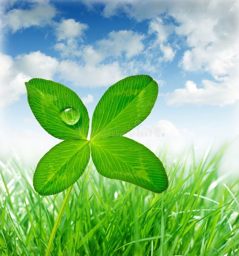 Four leaf clover. Grass border with four leaf clover stock photos