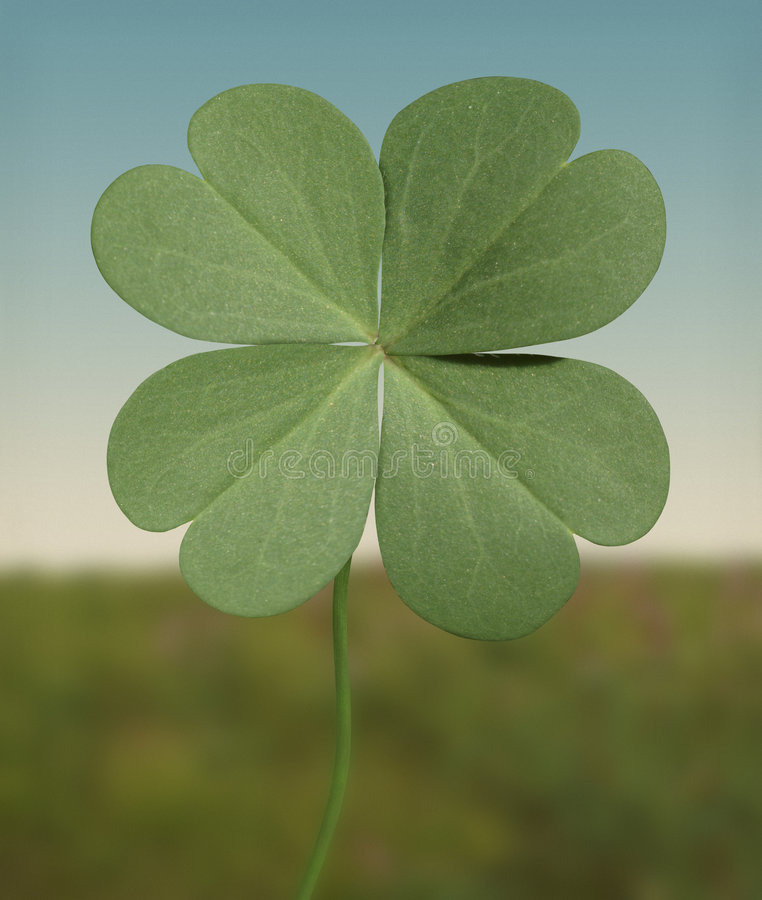 Free Four Leaf Clover Royalty Free Stock Images - 5557189