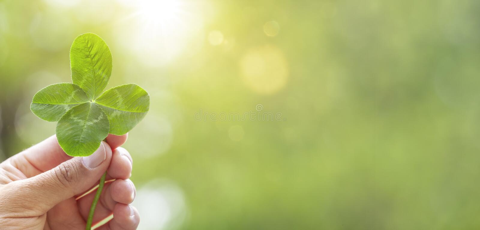 Four Leaf Clover in Hand royalty free stock photos