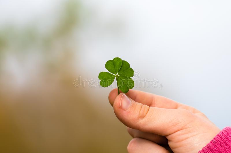 Four leaf clover in small hand royalty free stock photography