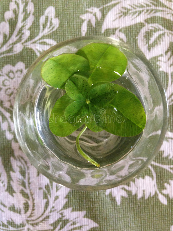 Four leaf clovers inset stock images