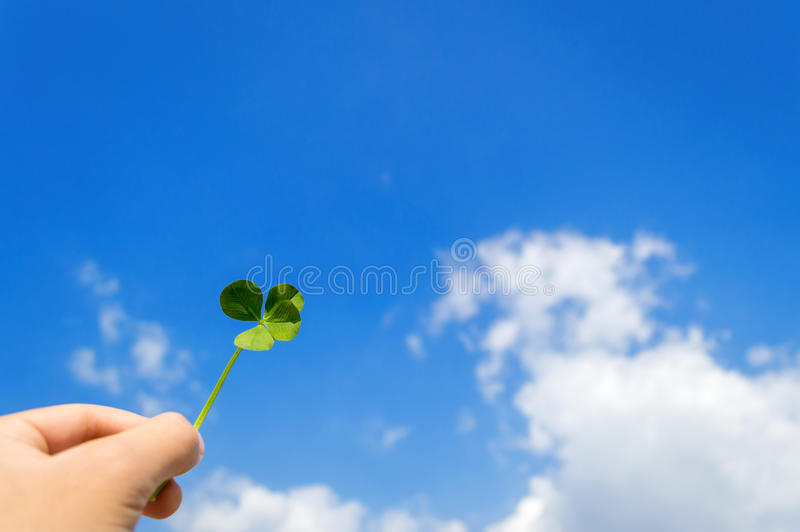 four leaf szczęście koniczynę fotografia stock