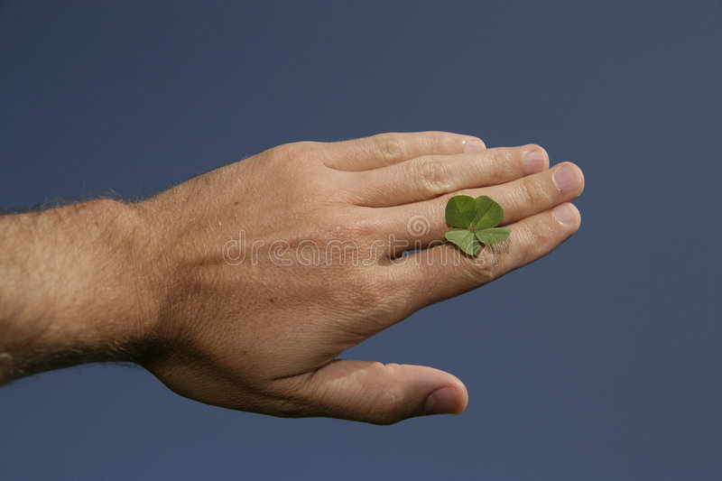 Four-leaved clover. Hand with fourleaf royalty free stock image