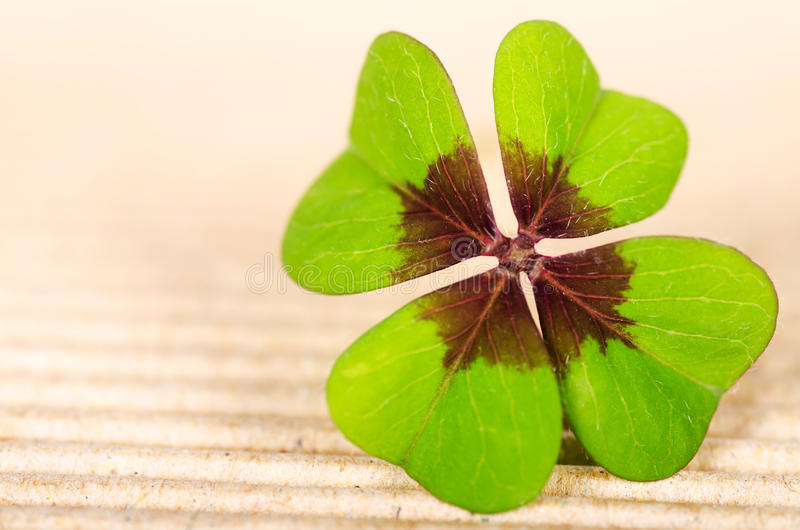 Four-leaved cloverleaf. Green four-leaved cloverleaf with copy space royalty free stock photos