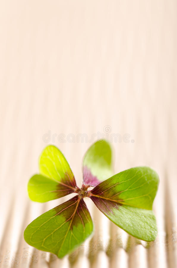 Four-leaved cloverleaf. Green four-leaved cloverleaf with copy space stock image
