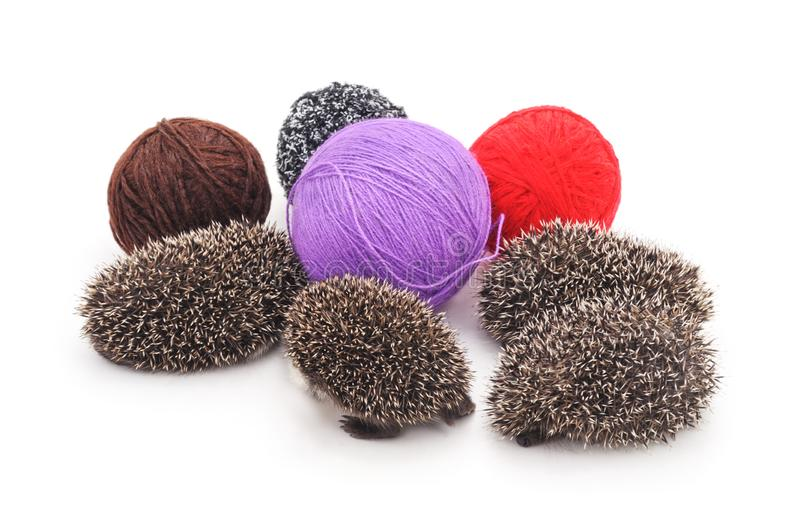 Four little hedgehogs with balls made of yarn. On a white background stock image