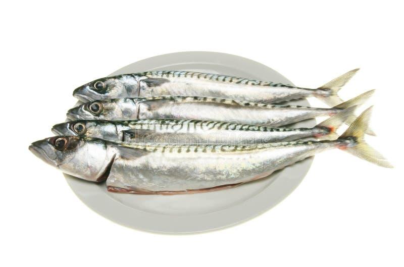 Four mackerel on plate stock photos