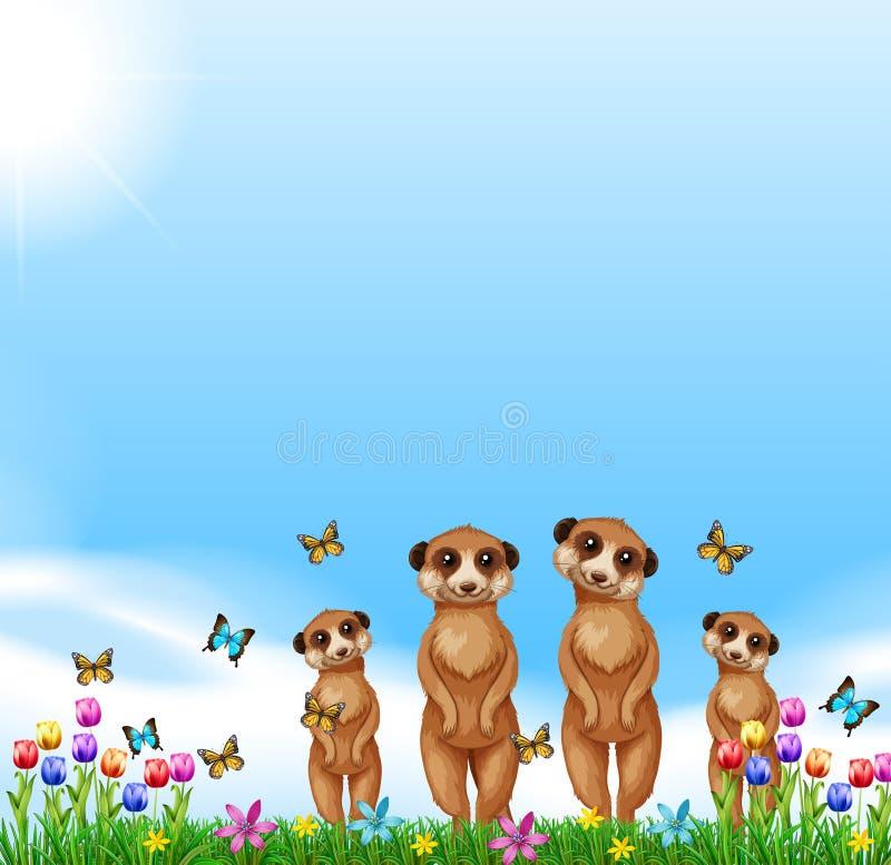 Download Four Meerkats Standing In The Field Stock Vector - Illustration: 82991862