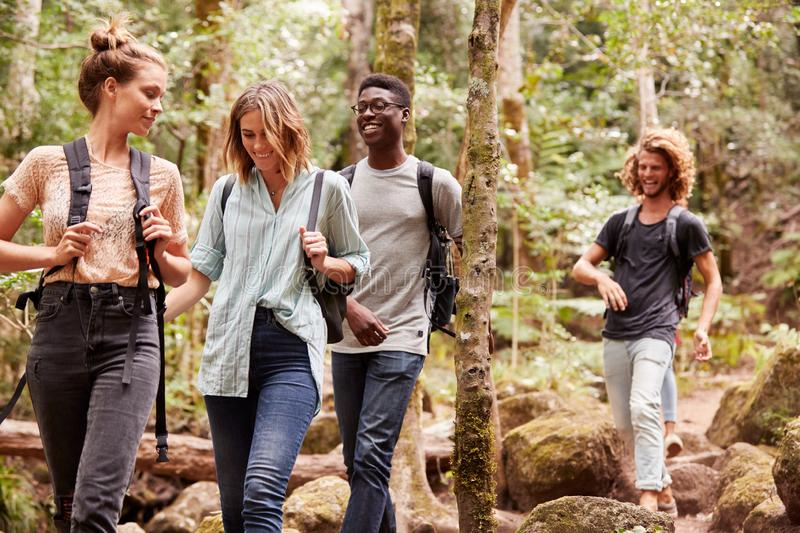 Four millennial friends hiking together in a forest, three quarter length stock photography