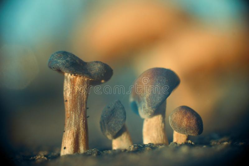 Four Mushroom Brothers Abstract Nature Background royalty free stock images