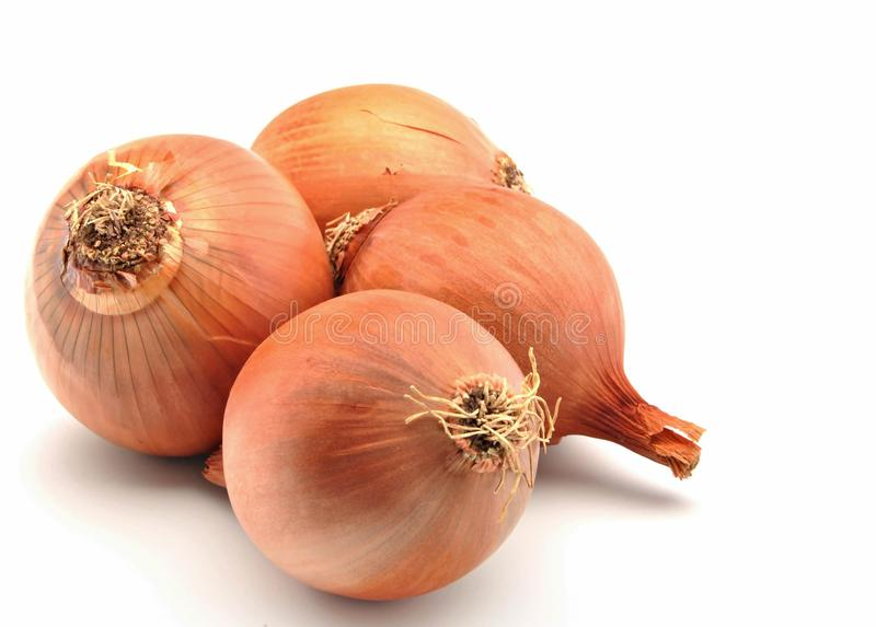 Four onions royalty free stock photos