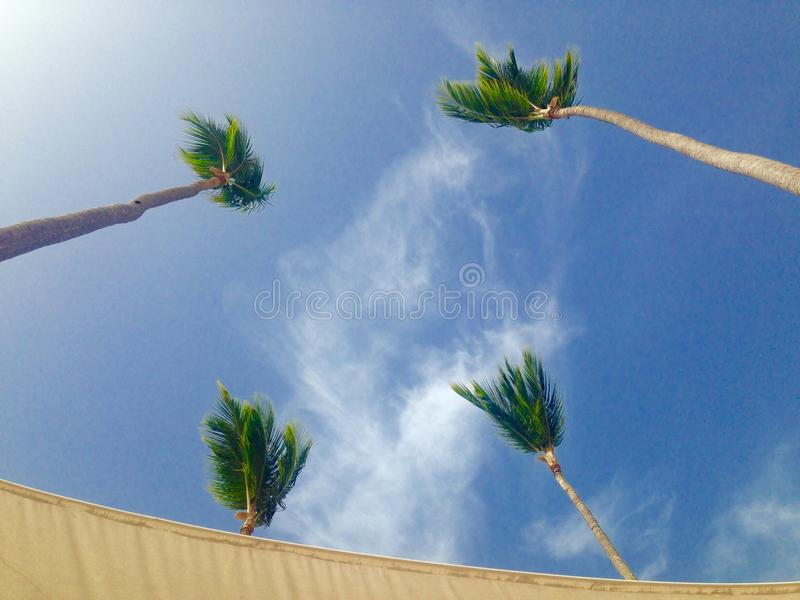 Four palm trees in the sky royalty free stock photos