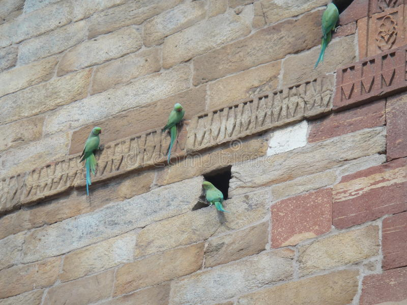 Four parrots on a wall. stock photo