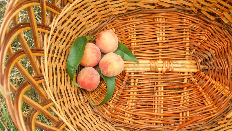 Four peach fruits with green leaves lie in a wicker basket top view stock photos