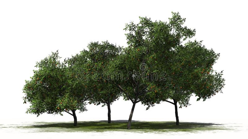 Four peach trees with fruits - separated on white background stock image
