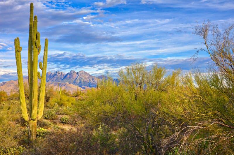 Four Peaks. Saguaro and Four Peaks near Phoenix, Arizona stock photography