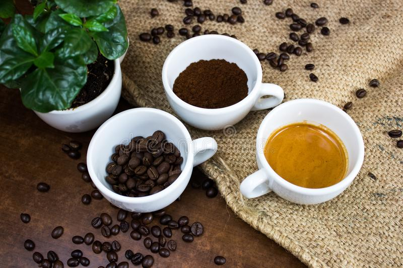 The four phases of coffee life royalty free stock photos