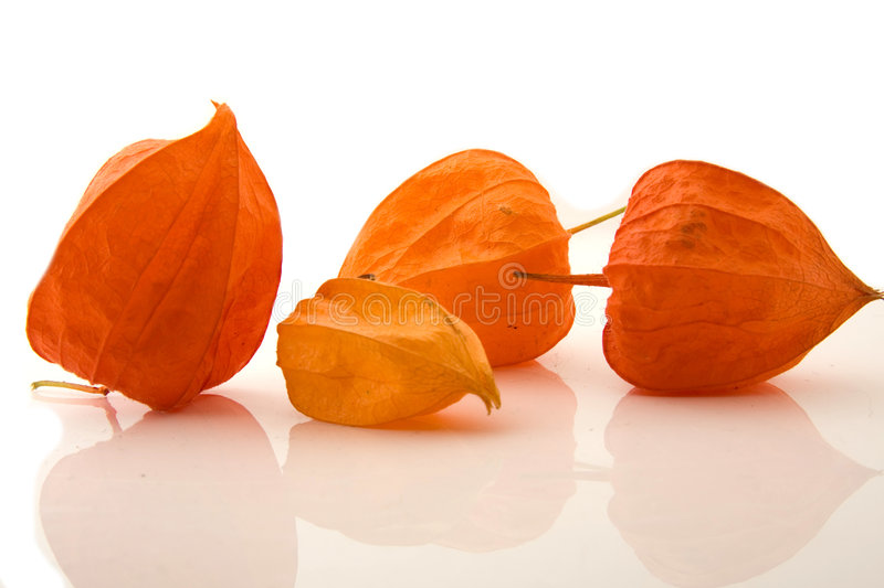 Download Four Physalis alkengi stock photo. Image of dried, food - 6625660
