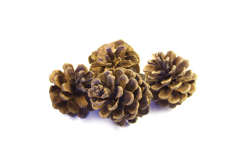Four Pine Cones royalty free stock photography