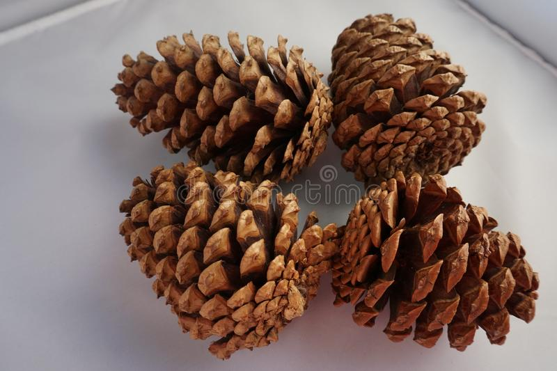 Four pine cones on a white background stock images