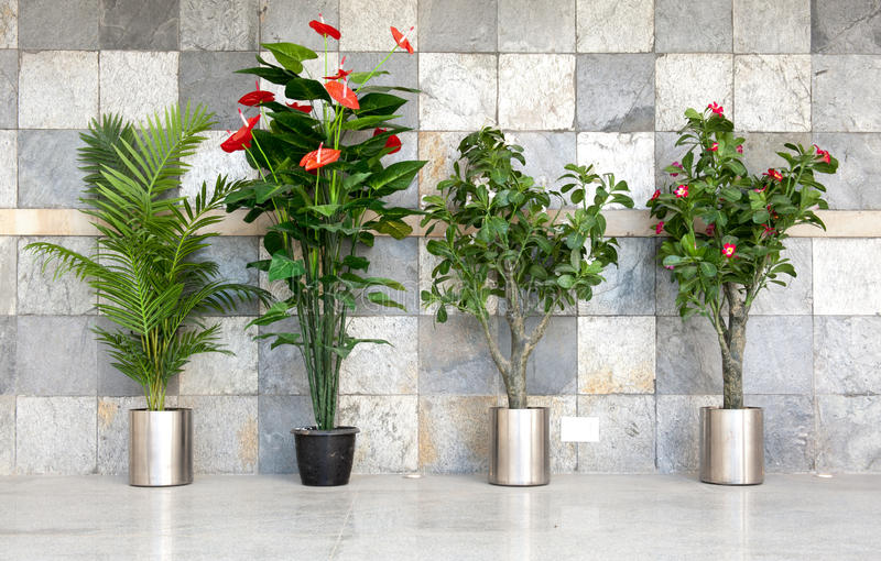 Four potted plants. Against stone wall royalty free stock photos