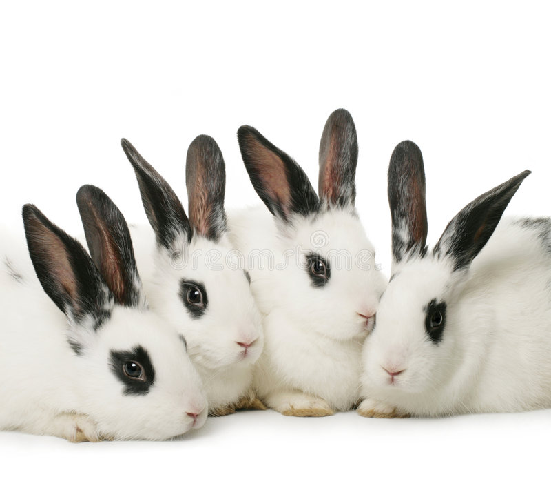 Free Four Rabbits Royalty Free Stock Images - 4198479