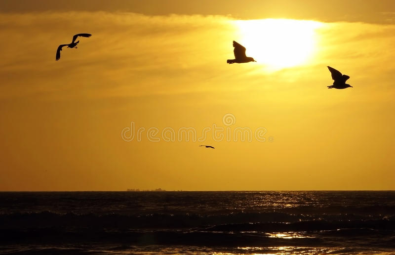 Download Four seagulls stock photo. Image of clouds, beach, horizon - 15040500