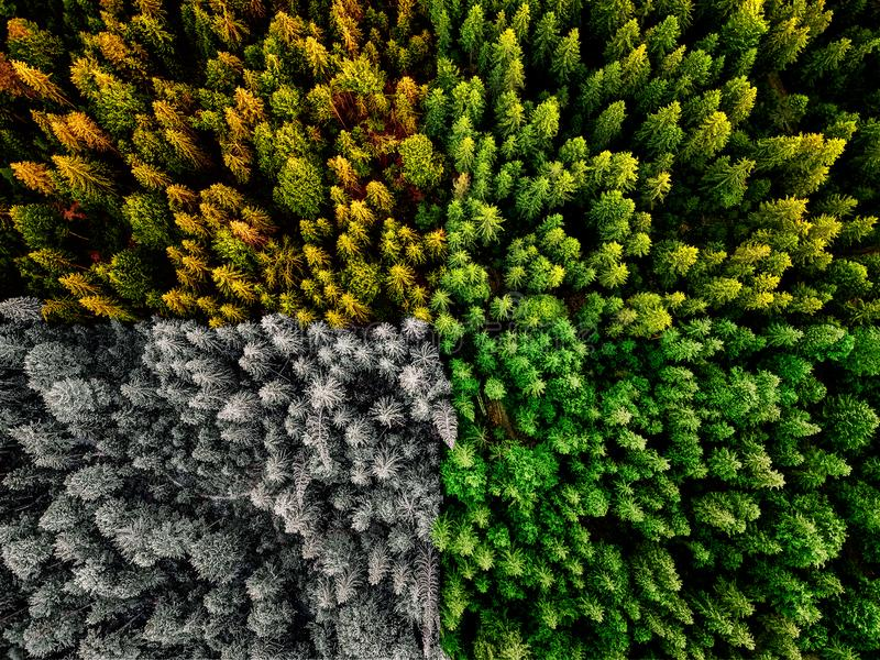 Four season colliding spring summer autumn and winter forest aerial shot with trees sunlight. Four seasons colliding spring summer autumn and winter forest stock photo