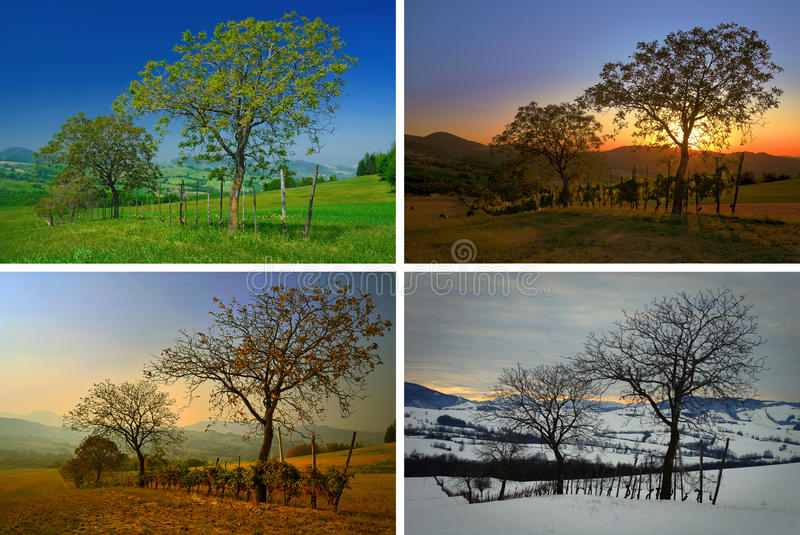 Download Four Seasons stock image. Image of trees, hills, year - 17551211