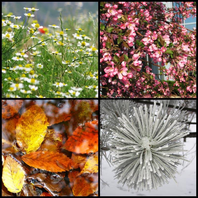 Four seasons. Nature photographs presenting four seasons stock image