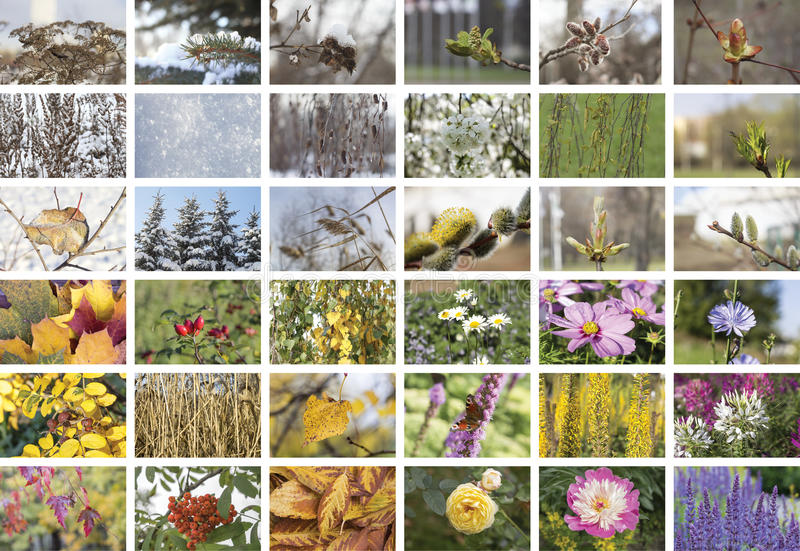 Four Seasons collage. Fall, winter, spring and summer. Four Seasons collage. Episodes natural conditions in different seasons: fall, winter, spring and summer stock photography