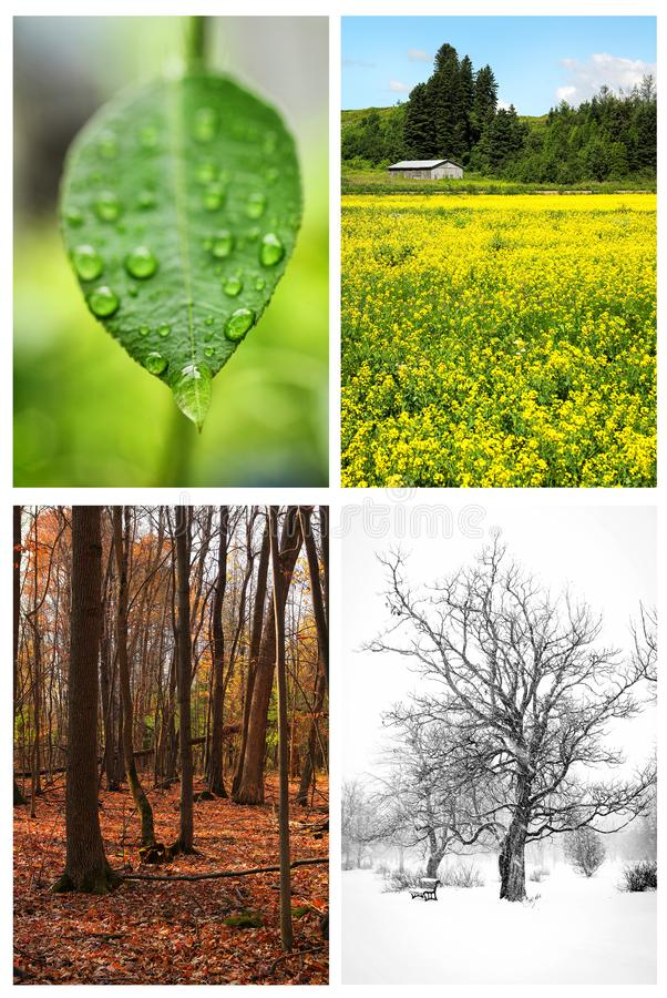 Four seasons. Collage of four pictures. one for each season, spring, summer, fall and winter royalty free stock photos