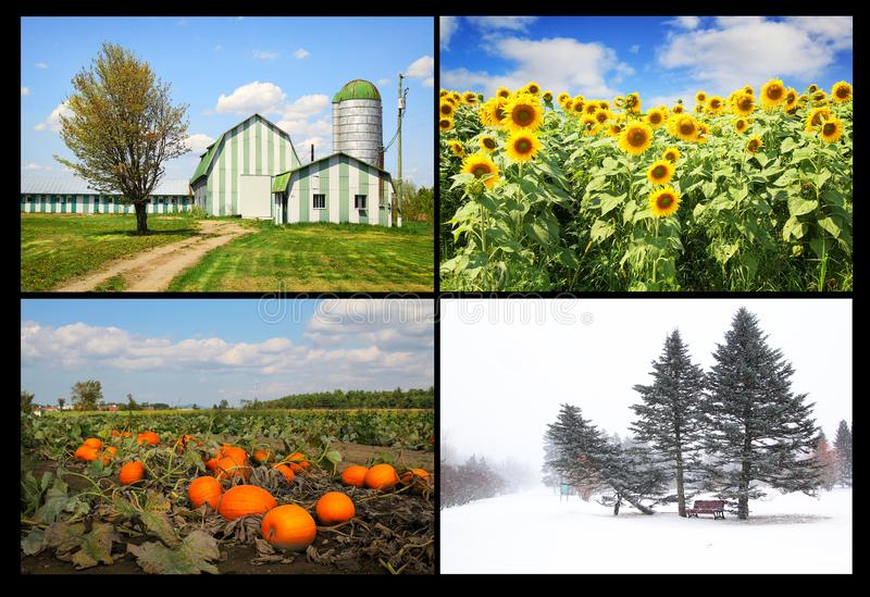 Four seasons. Collage of four pictures. one for each season, spring, summer, fall and winter royalty free stock photo