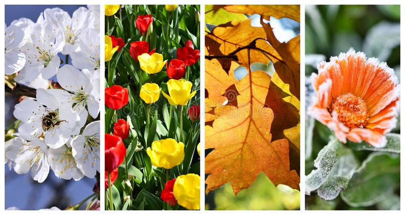 Four seasons collage: Spring, summer. Autumn and winter stock photography