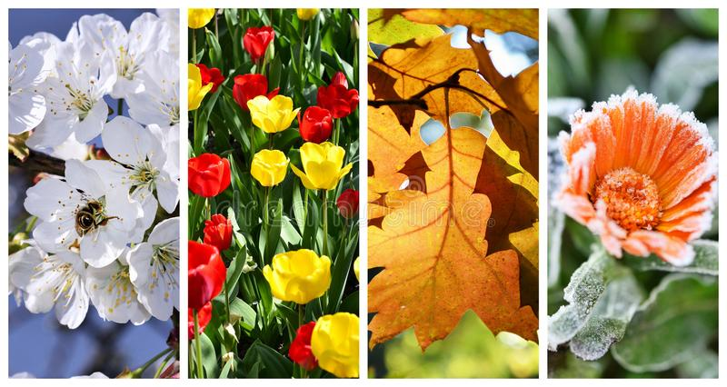Four seasons collage: Spring, summer,. Autumn and winter stock image