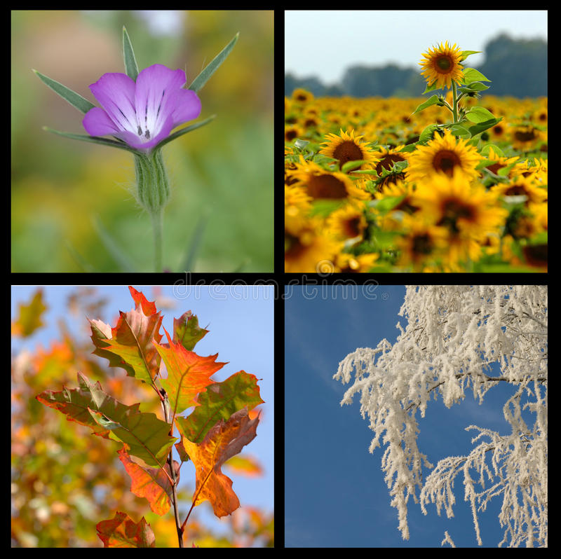 Four seasons collection. Beautiful collage of four pictures representing each season in year. Spring, summer, fall and winter Images taken in free nature as a stock images