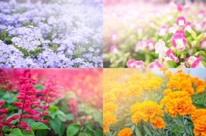 Four seasons of flower. Spring, summer, autumn and winter. Four colors purple, orange, red, pink for presentation. And happy valentine day. Decorated in royalty free stock photography