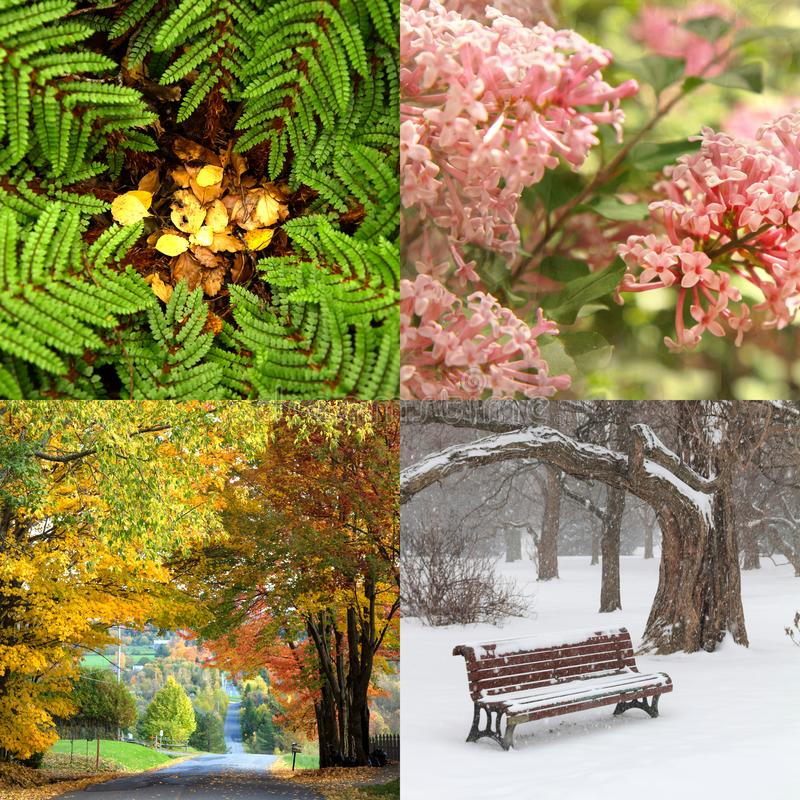 Four seasons in four pictures. Collage of four pictures. one for each season, spring, summer, fall and winter royalty free stock image